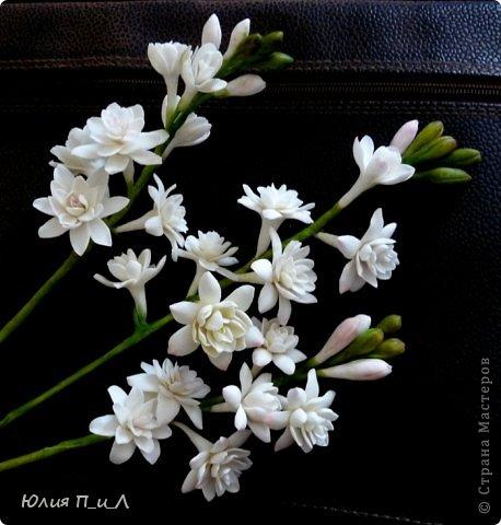 """Давно что-то не делала я цветов, и когда обратилась к своим запасникам обнаружила фото цветка, никак не похожего на розу,  под названием  - тубероза. Благодаря инету знаю, что лепестки туберозы имеют довольно плотную структуру и внешне смотрятся как восковые. На родине (Мексика)  ее называют каменным цветком, в Китае - душистый нефрит. Запах туберозы слегка напоминает лилейный или гиацинтовый, поэтому этот цветок нередко называют «ночным гиацинтом», используют в парфюмерии. В реальной жизни я цветка не видела, делала по фото, т.ч. могут быть и ошибки. Но если кому интересно, делаем со мной, это совсем не трудно. Обычно тубероза имеет белые цветки, но уже выведены махровые формы с кремовыми, розовыми, сиреневыми, пурпурными цветками. У меня цветы как бы кремовые, т.к. клей изначально был желтоват. Цветы сделаны из самоварной массы """"холодный фарфор"""". фото 9"""