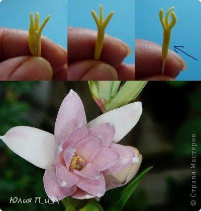 """Давно что-то не делала я цветов, и когда обратилась к своим запасникам обнаружила фото цветка, никак не похожего на розу,  под названием  - тубероза. Благодаря инету знаю, что лепестки туберозы имеют довольно плотную структуру и внешне смотрятся как восковые. На родине (Мексика)  ее называют каменным цветком, в Китае - душистый нефрит. Запах туберозы слегка напоминает лилейный или гиацинтовый, поэтому этот цветок нередко называют «ночным гиацинтом», используют в парфюмерии. В реальной жизни я цветка не видела, делала по фото, т.ч. могут быть и ошибки. Но если кому интересно, делаем со мной, это совсем не трудно. Обычно тубероза имеет белые цветки, но уже выведены махровые формы с кремовыми, розовыми, сиреневыми, пурпурными цветками. У меня цветы как бы кремовые, т.к. клей изначально был желтоват. Цветы сделаны из самоварной массы """"холодный фарфор"""". фото 2"""