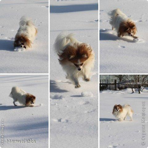 Собака-Улыбака  фото 4