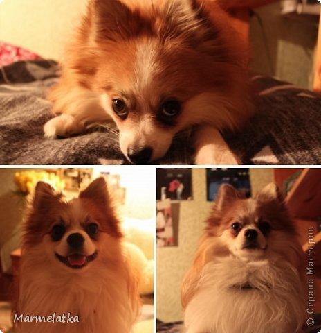 Собака-Улыбака  фото 3