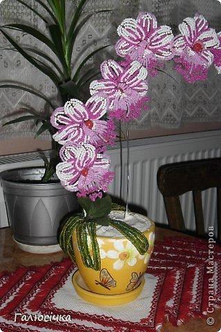 ДЛя того щоб зробити таку орхідею потрібно 3 кольори бісеру на квіти 2 на листки та великі буси та дріт кусок грубого на стебло , та тонкого на самі квіти фото 12