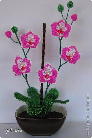 """Орхидея-Юная кокетка.   """" Мир Бисера.com - бисероплетение, бисер схемы, мастер классы."""