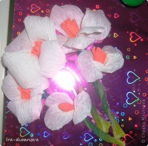 Цветочки Анжелики П. фото 1