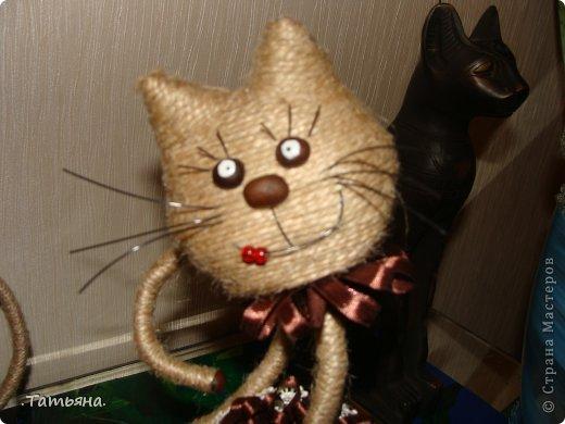 кошачье царство фото 7