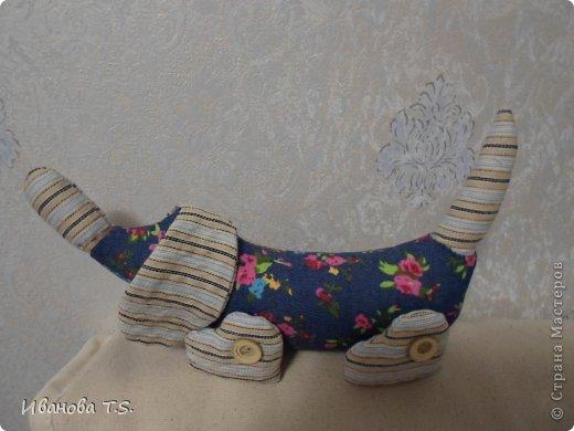 Котейки. фото 5