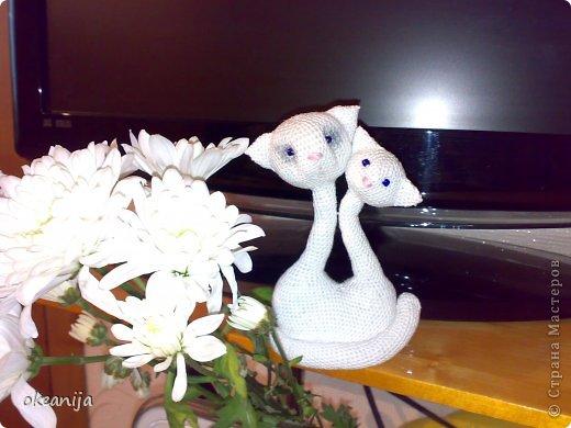 кошечка с котенком фото 2
