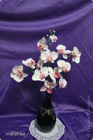 мои орхидеи фото 1