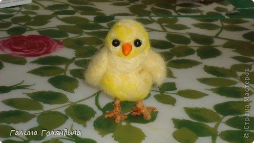 мой смешной цыпленок - вторая попытка валяния