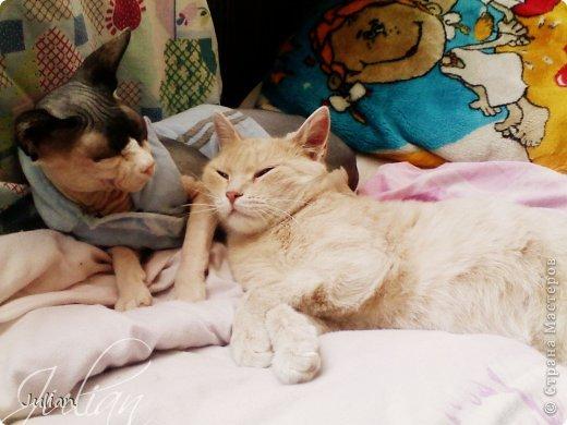 """Знакомьтесь, это мой кот- Оскар, ласков Оскарбинка, поселился он у нас с пол года назад. Оскар- канадский сфинкс, как же я давно мечтала о """"лысой"""" кошке, и вот сбылась мечта идиотки)))  фото 5"""