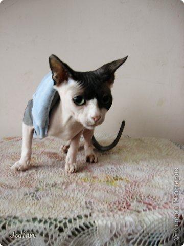 """Знакомьтесь, это мой кот- Оскар, ласков Оскарбинка, поселился он у нас с пол года назад. Оскар- канадский сфинкс, как же я давно мечтала о """"лысой"""" кошке, и вот сбылась мечта идиотки)))  фото 2"""