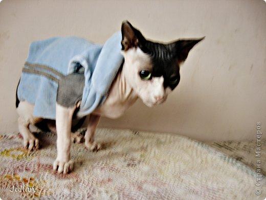 """Знакомьтесь, это мой кот- Оскар, ласков Оскарбинка, поселился он у нас с пол года назад. Оскар- канадский сфинкс, как же я давно мечтала о """"лысой"""" кошке, и вот сбылась мечта идиотки)))  фото 3"""