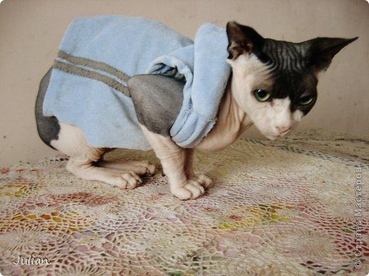 """Знакомьтесь, это мой кот- Оскар, ласков Оскарбинка, поселился он у нас с пол года назад. Оскар- канадский сфинкс, как же я давно мечтала о """"лысой"""" кошке, и вот сбылась мечта идиотки)))  фото 1"""