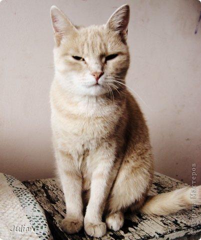 """Знакомьтесь, это мой кот- Оскар, ласков Оскарбинка, поселился он у нас с пол года назад. Оскар- канадский сфинкс, как же я давно мечтала о """"лысой"""" кошке, и вот сбылась мечта идиотки)))  фото 6"""