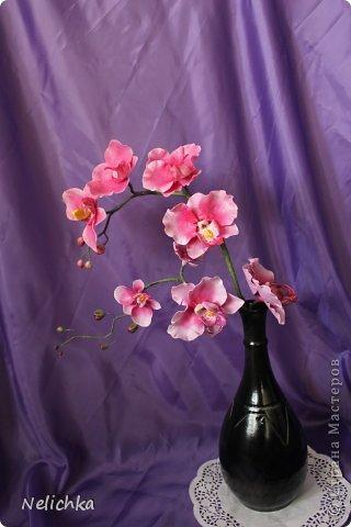 мои орхидеи фото 7