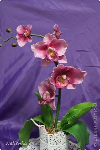 мои орхидеи фото 8