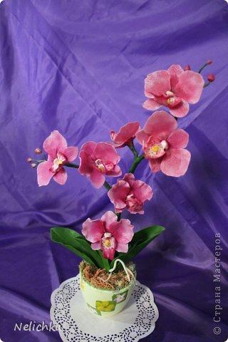 мои орхидеи фото 3