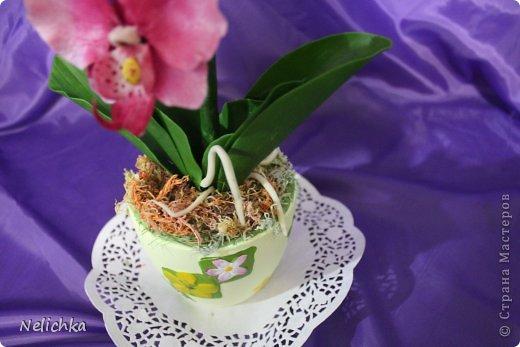 мои орхидеи фото 6