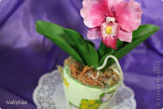 мои орхидеи фото 5