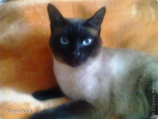 Любимый кот  фото 6