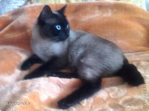 Любимый кот  фото 7