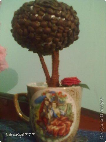 первое кофе дерево, очень много недочетов фото 1