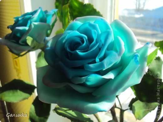 Зимой ещё слепила голубые розы, а сфотографировать всё забывала.