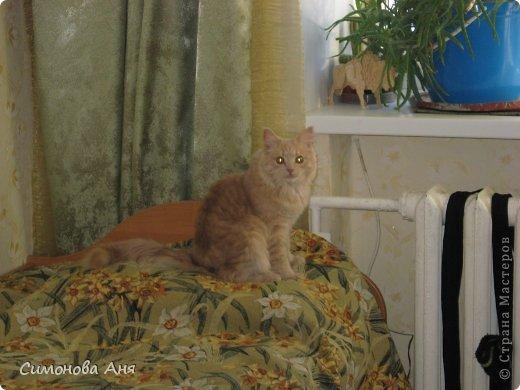 Итак познакомьтесь,это мой котик!Его зовут Кекс.Он маленький и очень вредный. фото 1