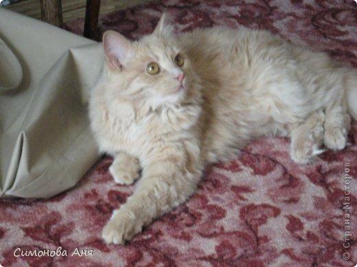 Итак познакомьтесь,это мой котик!Его зовут Кекс.Он маленький и очень вредный. фото 4