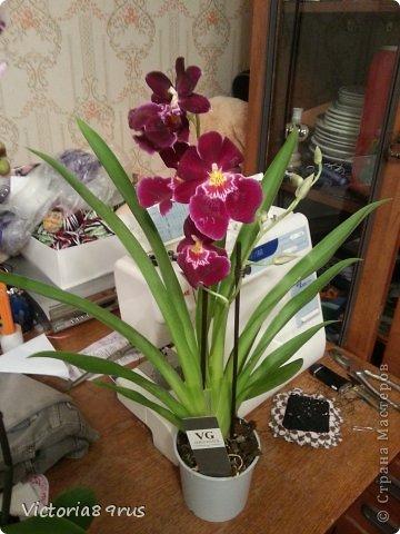 С нее все началось,  первый цветок подарили в 2010 году, это была любовь с первого взгляда! фото 17