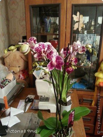 С нее все началось,  первый цветок подарили в 2010 году, это была любовь с первого взгляда! фото 12