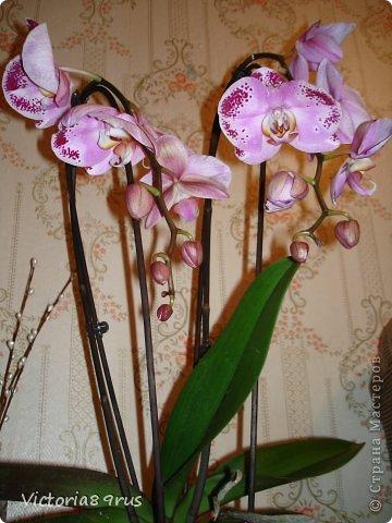 С нее все началось,  первый цветок подарили в 2010 году, это была любовь с первого взгляда! фото 4
