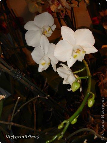 С нее все началось,  первый цветок подарили в 2010 году, это была любовь с первого взгляда! фото 3