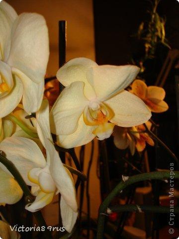 С нее все началось,  первый цветок подарили в 2010 году, это была любовь с первого взгляда! фото 5