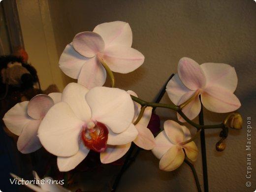 С нее все началось,  первый цветок подарили в 2010 году, это была любовь с первого взгляда! фото 7
