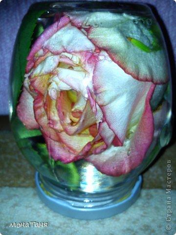 Консервированная роза фото 3