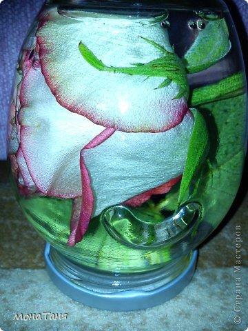 Консервированная роза