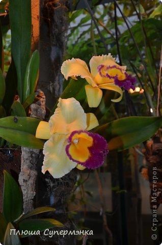 """Вот уже в четвертый раз """"Аптекарский  огород"""" (Ботанический сад МГУ им. ЛОмоносова) проводит фестиваль орхидей, а в этом году еще и выставку суккулентов. Посетив пальмовую оранжерею """"Аптекарского огорода"""" погружаешься в тропическое лето среди зимы. В этом году фестиваль заканчивается 24 марта. Жители и гости столицы, у вас еще есть целая неделя! Сходите, не пожалеете! Вся информация есть на сайте ботанического сада МГУ.  Ну а дальше, просто мои фото, без комментариев-наслаждайтесь!!! фото 2"""