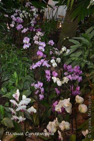 """Вот уже в четвертый раз """"Аптекарский  огород"""" (Ботанический сад МГУ им. ЛОмоносова) проводит фестиваль орхидей, а в этом году еще и выставку суккулентов. Посетив пальмовую оранжерею """"Аптекарского огорода"""" погружаешься в тропическое лето среди зимы. В этом году фестиваль заканчивается 24 марта. Жители и гости столицы, у вас еще есть целая неделя! Сходите, не пожалеете! Вся информация есть на сайте ботанического сада МГУ.  Ну а дальше, просто мои фото, без комментариев-наслаждайтесь!!! фото 3"""