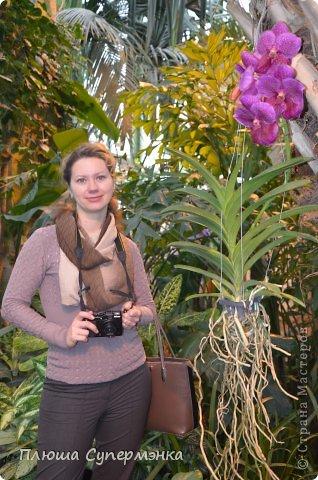 """Вот уже в четвертый раз """"Аптекарский  огород"""" (Ботанический сад МГУ им. ЛОмоносова) проводит фестиваль орхидей, а в этом году еще и выставку суккулентов. Посетив пальмовую оранжерею """"Аптекарского огорода"""" погружаешься в тропическое лето среди зимы. В этом году фестиваль заканчивается 24 марта. Жители и гости столицы, у вас еще есть целая неделя! Сходите, не пожалеете! Вся информация есть на сайте ботанического сада МГУ.  Ну а дальше, просто мои фото, без комментариев-наслаждайтесь!!! фото 7"""