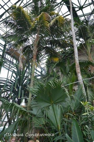"""Вот уже в четвертый раз """"Аптекарский  огород"""" (Ботанический сад МГУ им. ЛОмоносова) проводит фестиваль орхидей, а в этом году еще и выставку суккулентов. Посетив пальмовую оранжерею """"Аптекарского огорода"""" погружаешься в тропическое лето среди зимы. В этом году фестиваль заканчивается 24 марта. Жители и гости столицы, у вас еще есть целая неделя! Сходите, не пожалеете! Вся информация есть на сайте ботанического сада МГУ.  Ну а дальше, просто мои фото, без комментариев-наслаждайтесь!!! фото 23"""