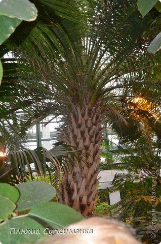 """Вот уже в четвертый раз """"Аптекарский  огород"""" (Ботанический сад МГУ им. ЛОмоносова) проводит фестиваль орхидей, а в этом году еще и выставку суккулентов. Посетив пальмовую оранжерею """"Аптекарского огорода"""" погружаешься в тропическое лето среди зимы. В этом году фестиваль заканчивается 24 марта. Жители и гости столицы, у вас еще есть целая неделя! Сходите, не пожалеете! Вся информация есть на сайте ботанического сада МГУ.  Ну а дальше, просто мои фото, без комментариев-наслаждайтесь!!! фото 30"""