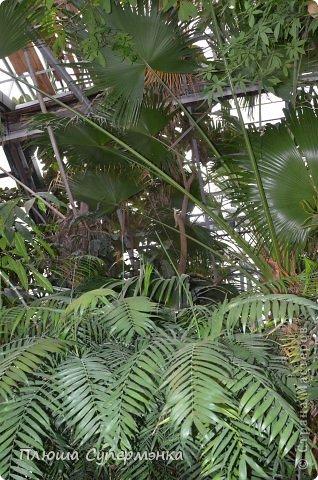 """Вот уже в четвертый раз """"Аптекарский  огород"""" (Ботанический сад МГУ им. ЛОмоносова) проводит фестиваль орхидей, а в этом году еще и выставку суккулентов. Посетив пальмовую оранжерею """"Аптекарского огорода"""" погружаешься в тропическое лето среди зимы. В этом году фестиваль заканчивается 24 марта. Жители и гости столицы, у вас еще есть целая неделя! Сходите, не пожалеете! Вся информация есть на сайте ботанического сада МГУ.  Ну а дальше, просто мои фото, без комментариев-наслаждайтесь!!! фото 37"""