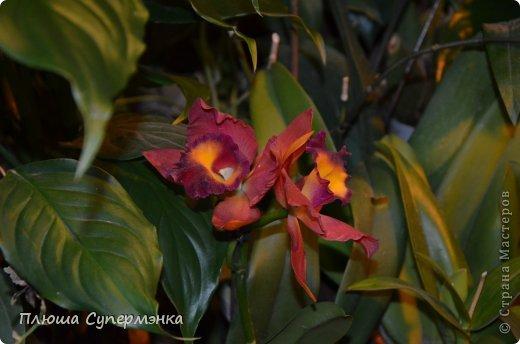 """Вот уже в четвертый раз """"Аптекарский  огород"""" (Ботанический сад МГУ им. ЛОмоносова) проводит фестиваль орхидей, а в этом году еще и выставку суккулентов. Посетив пальмовую оранжерею """"Аптекарского огорода"""" погружаешься в тропическое лето среди зимы. В этом году фестиваль заканчивается 24 марта. Жители и гости столицы, у вас еще есть целая неделя! Сходите, не пожалеете! Вся информация есть на сайте ботанического сада МГУ.  Ну а дальше, просто мои фото, без комментариев-наслаждайтесь!!! фото 41"""