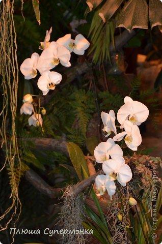 """Вот уже в четвертый раз """"Аптекарский  огород"""" (Ботанический сад МГУ им. ЛОмоносова) проводит фестиваль орхидей, а в этом году еще и выставку суккулентов. Посетив пальмовую оранжерею """"Аптекарского огорода"""" погружаешься в тропическое лето среди зимы. В этом году фестиваль заканчивается 24 марта. Жители и гости столицы, у вас еще есть целая неделя! Сходите, не пожалеете! Вся информация есть на сайте ботанического сада МГУ.  Ну а дальше, просто мои фото, без комментариев-наслаждайтесь!!! фото 44"""