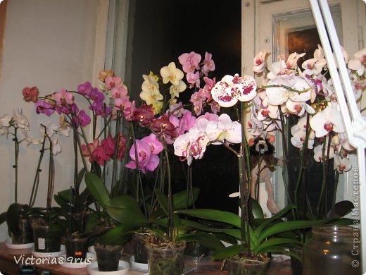С нее все началось,  первый цветок подарили в 2010 году, это была любовь с первого взгляда! фото 16