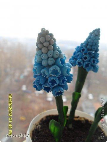 Наконец-то добралась до своего блога. Вот мои мускарики..... Очень понравились мускари Алексея..... Мой скромный)))) кусочек весны....