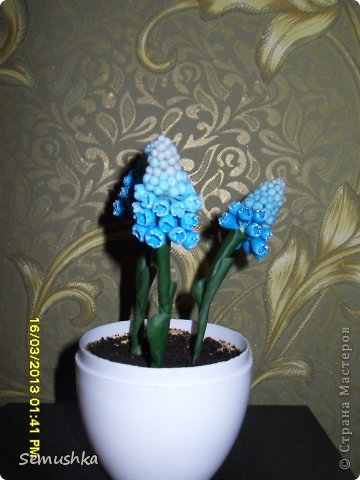 Наконец-то добралась до своего блога. Вот мои мускарики..... Очень понравились мускари Алексея..... Мой скромный)))) кусочек весны....  фото 2