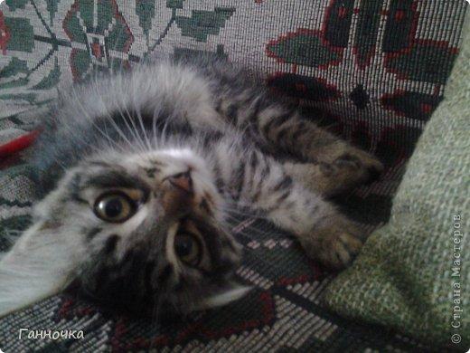 Серая троица) Таких котов я люблю делать больше всего. Котик в очках - подарок сестре в честь ее победы на городской конференции.  фото 3