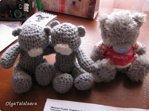 милые мишки фото 4