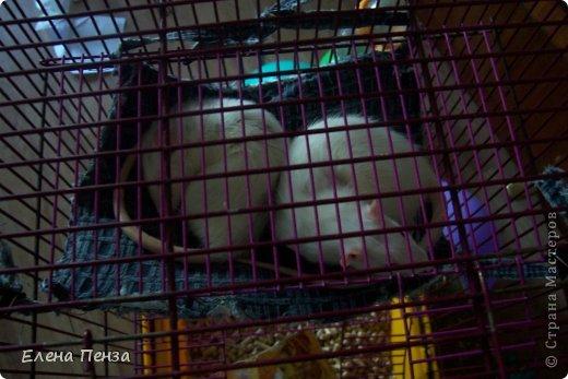 Здравствуйте это Настя!Это мои питомцы.Такая у них была клетка . Крыски очень любят норки , поэтому я решила сделать  им гамак и домики. фото 7